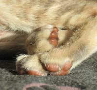 paw pad leather