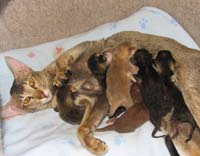 happy OSH mom and PD kittens
